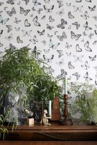 tepetai drugeliai